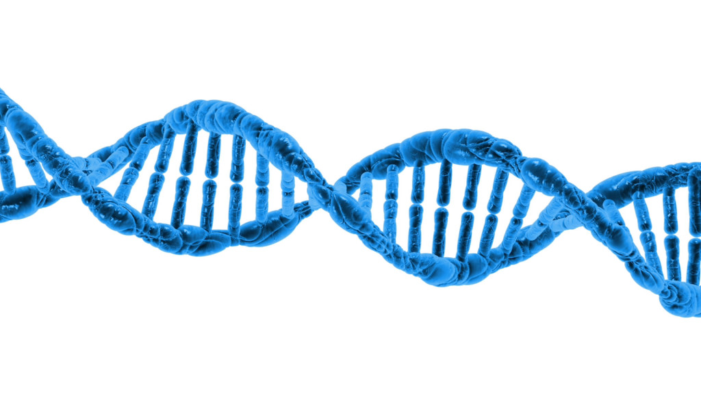 DNA, Image Source: http://www.publicdomainpictures.net/view-image.php?image=42718&picture=dna